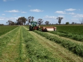 Smyth Seeds Benalla Annual Ryegrass
