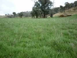 Smyth Seeds Benalla Tall Fescue